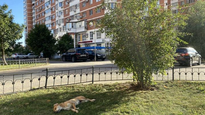 В Краснодарском крае на майские праздники потеплеет до25°С