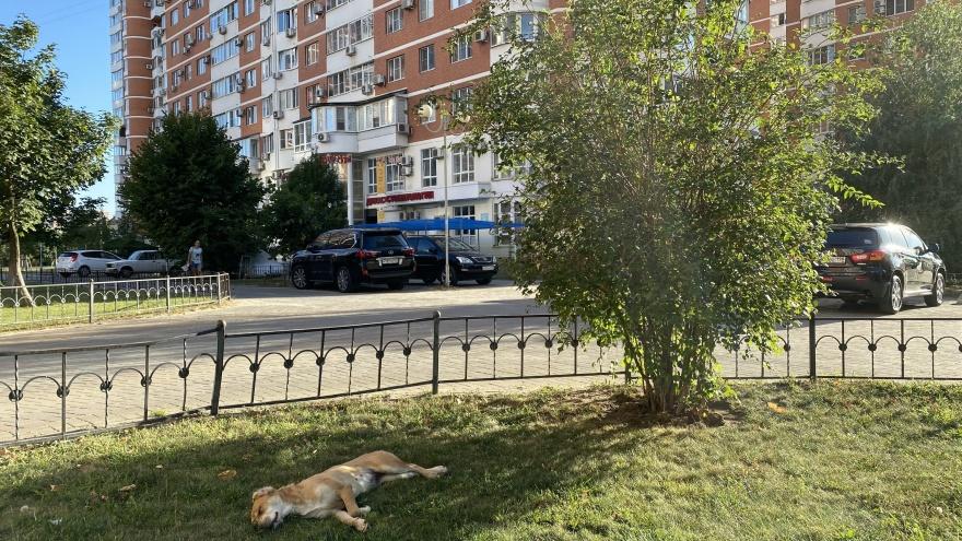 """На Кубани рабочая неделя начнется с жары до <nobr class=""""_"""">36 °С</nobr>"""