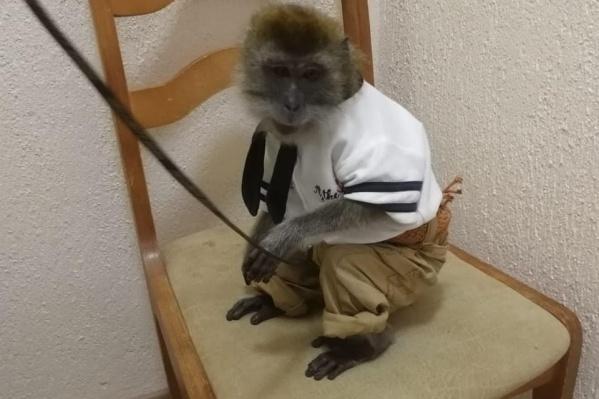 Животных передали в зоопарк