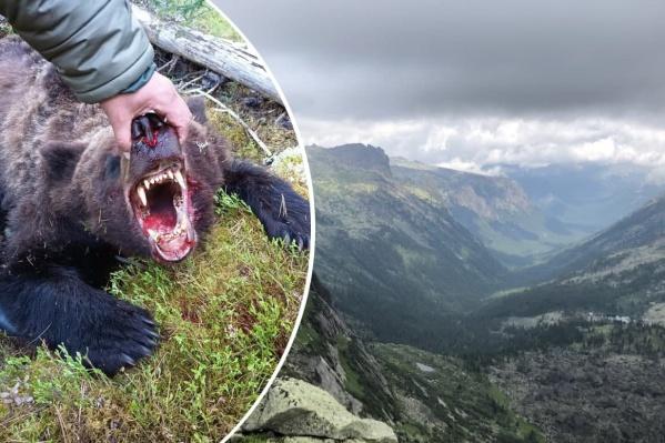 Напавшего на подростка медведя убили, это была молодая особь
