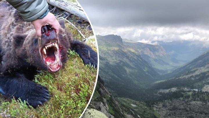 «Подмял под себя, рвал, снимая рюкзак»: что известно к данному часу о нападении медведя на туристов