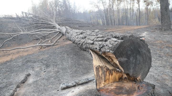 Загубленные сосны и пепелище вместо домов: показываем пожар в Борском районе в 20 фото