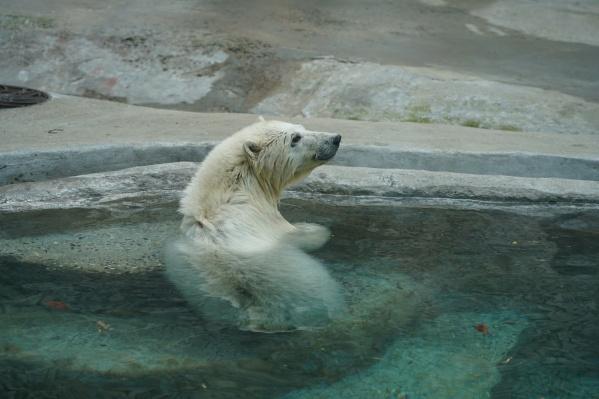 Имя медведице выбирали по голосованию в соцсетях. Хатанга — это название села, рядом с которым нашли животное