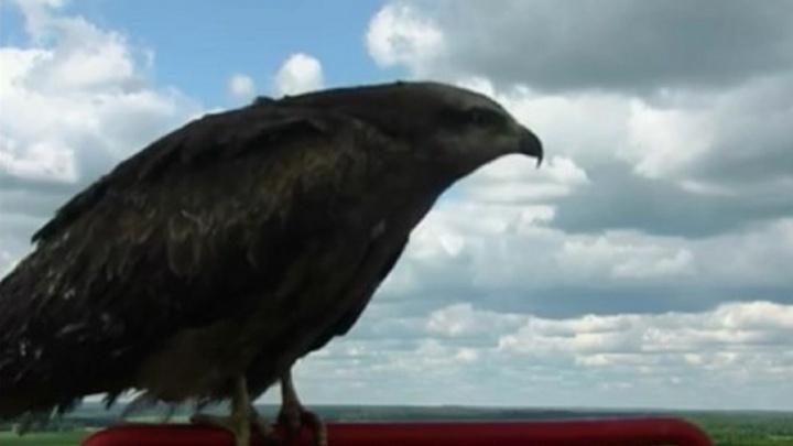 Система видеонаблюдения за лесными пожарами сняла в Прикамье редкую африканскую птицу