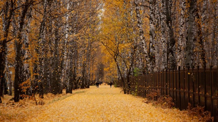 Пошуршим листьями! Виртуальная прогулка по тюменским паркам и скверам в 23 фото