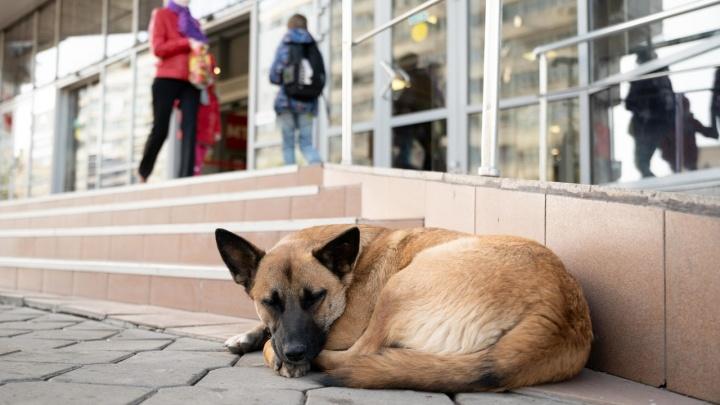 В центре Волгограда стая собак кинулась на семью с двумя детьми
