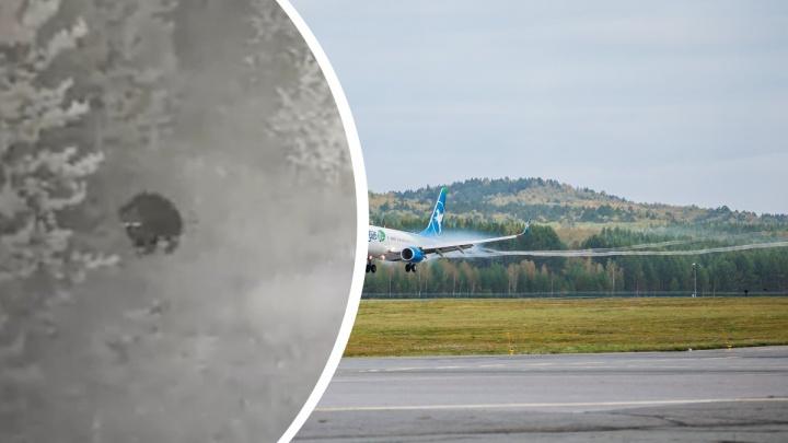 Любопытный медведь выбрался к торцу взлетной полосы красноярского аэропорта
