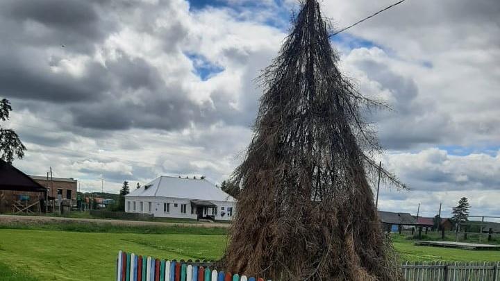 «У главы поселения до сих пор Новый год!»: праздничная ель простояла до конца июня в красноярском селе