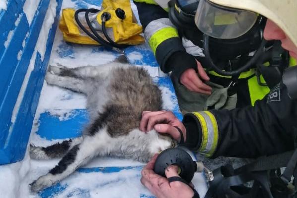 Животное спряталось под кровать во время пожара