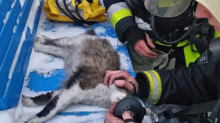Кемеровские спасатели вытащили из пожара кошку и реанимировали ее. Посмотрите это милое фото