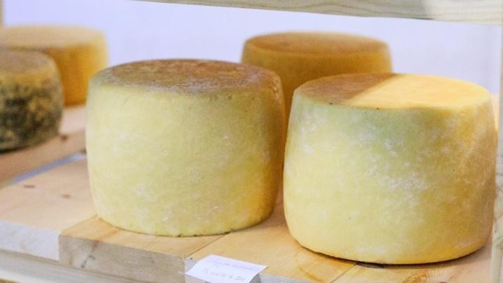 «Спрос есть»: курганская многодетная семья открыла свою сыроварню