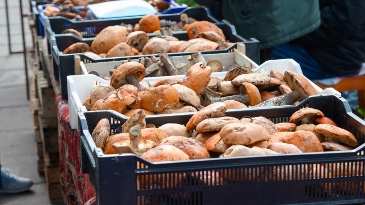Цены на грибы на рынках Архангельска в одной картинке