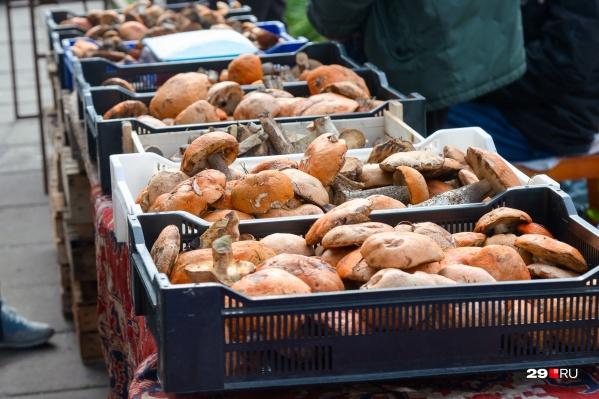 Много грибов везут из Шенкурского и Пинежского районов