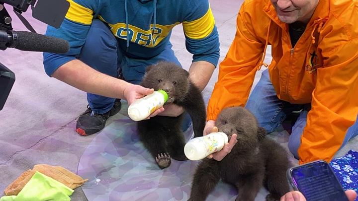 Самый милый текст дня: смотрим на крикливых медвежат и фотогеничных обезьянок