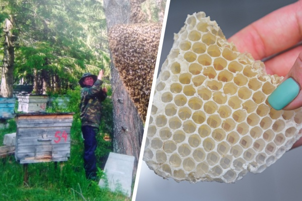 В период роения пчелы могут садиться на деревья, их оттуда нужно снимать