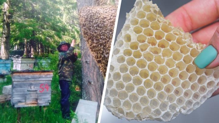 «Уже иммунитет от яда выработался». Как пермяки открыли семейный бизнес на пчелином воске