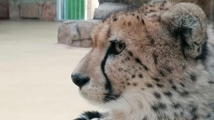«Требуем перестать убивать наших животных»: посетители вывели из себя сотрудников зоопарка Казани