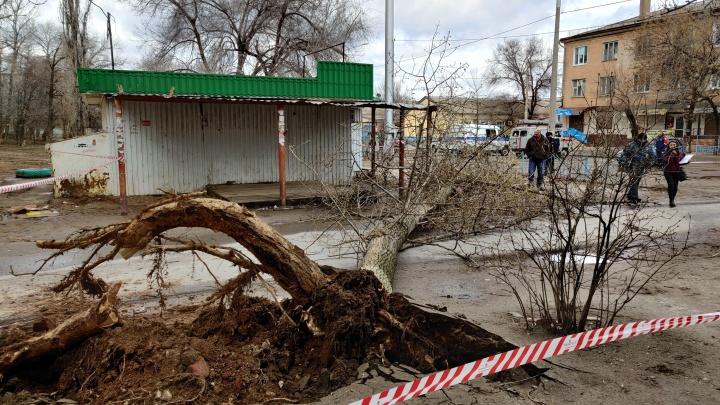 В Волгограде рухнувшее от урагана дерево убило женщину