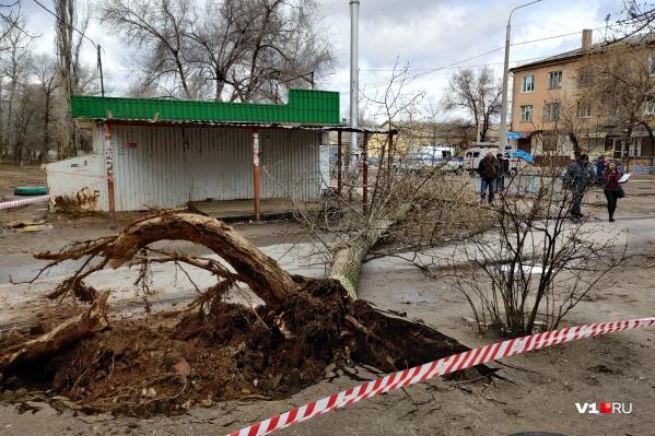 Рухнувшее дерево насмерть придавило женщину