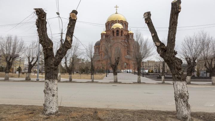 «В головах у них, что большие деревья — опасные монстры»: профессор о деревьях и неврозах чиновников в Волгограде