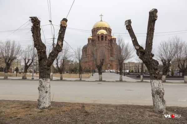 Обрубленные деревья в Волгограде выглядят как его новый бренд за три с половиной миллиона