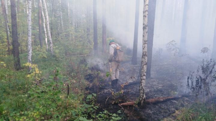 Спасатели эвакуировали людей из санатория «Озеро Глухое» из-за лесного пожара