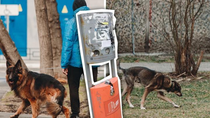 Как заставить соседа убирать за собакой, чем опасны фекалии и как правильно их утилизировать