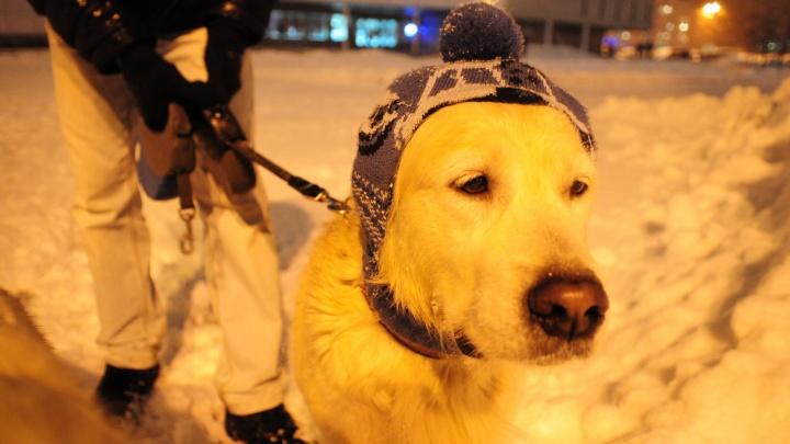 Владельцам животных в Екатеринбурге придется соблюдать новые правила. Разбираем документ с зоозащитниками