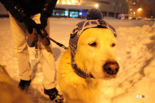 Владельцам домашних животных придется изучить новые правила их содержания