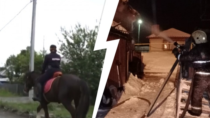 Сгорели шесть лошадей и один пони: конная полиция на Урале стала пешей после ночного пожара