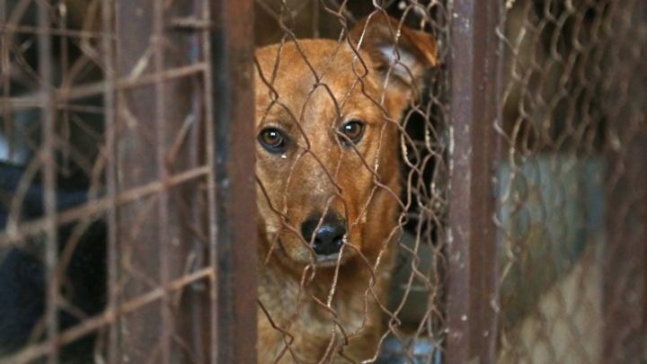 Стая бездомных собак держит в ужасе жителей села под Уфой