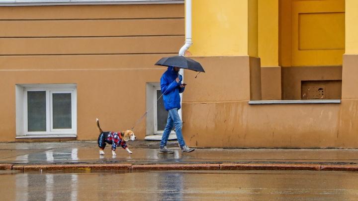 Дожди и прохлада придут в Нижний Новгород: прогноз погоды на эту неделю