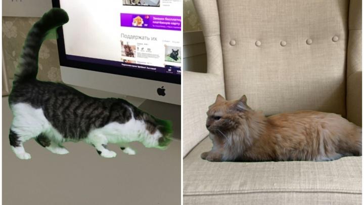 За животными из пермского приюта «Матроскин» теперь можно наблюдать в режиме дополненной реальности в своей квартире