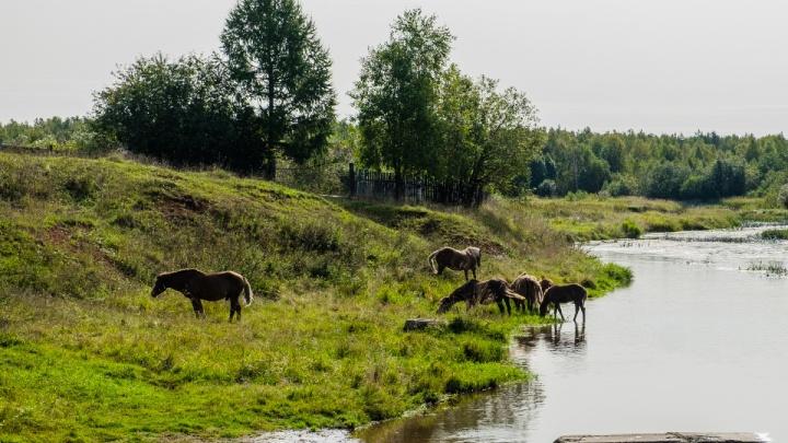 Гидрометцентр рассказал, какой будет погода в Пермском крае весной и летом