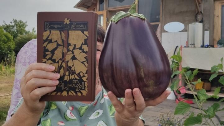 Свекла на полтора килограмма и томат-гигант: публикуем подборку фото урожая с самарских огородов