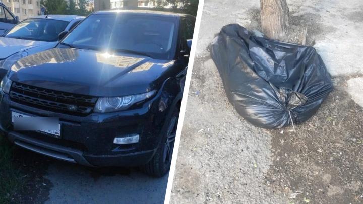 В Екатеринбурге молодой хаски умер в салоне авто, где его запер хозяин