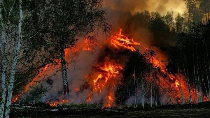 Минлесхоз Башкирии запросил на тушение пожаров 11,4 миллиона рублей