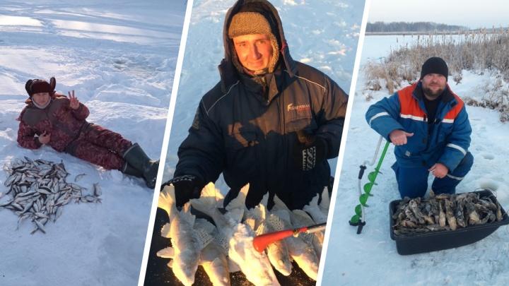 Новосибирцы хвастаются своими огромными зимними уловами. Рассказываем, где они рыбачили