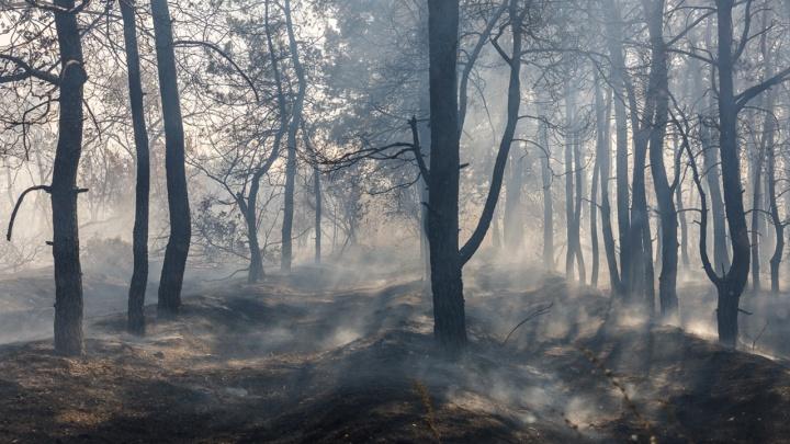 В Урюпинском районе тушат верховой пожар в лесничестве