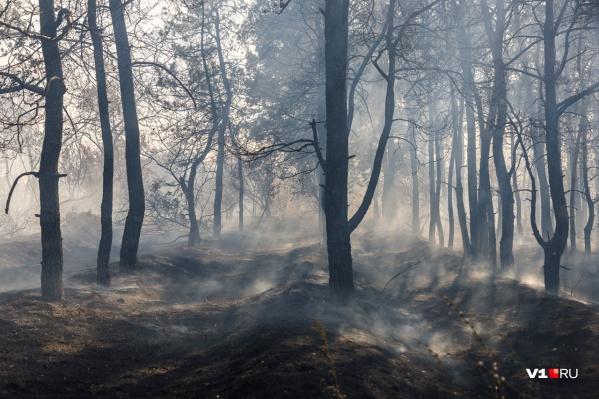 Огонь пока не угрожает населенным пунктам