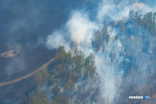 В этом году на территории Омской области потушили уже 443 лесных пожара