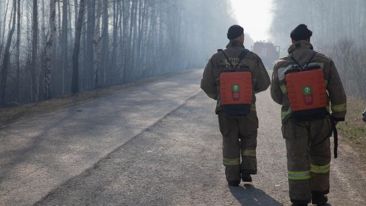В тюменских лесах стали специально поджигать траву, чтобы потушить огонь. Почему это нормально