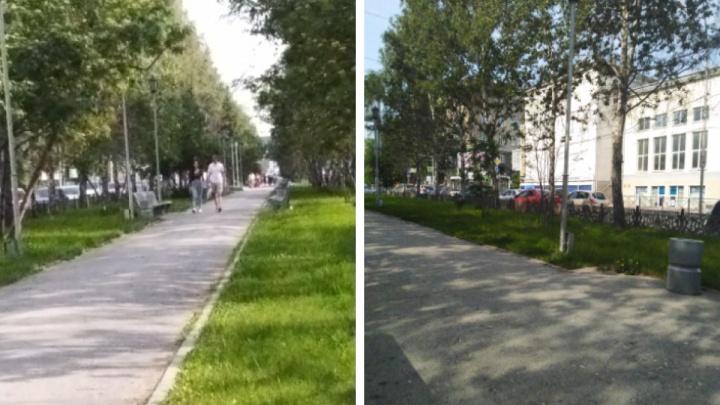Как хотят переделать бульвар на Красном проспекте — смотрим реконструкцию озеленения