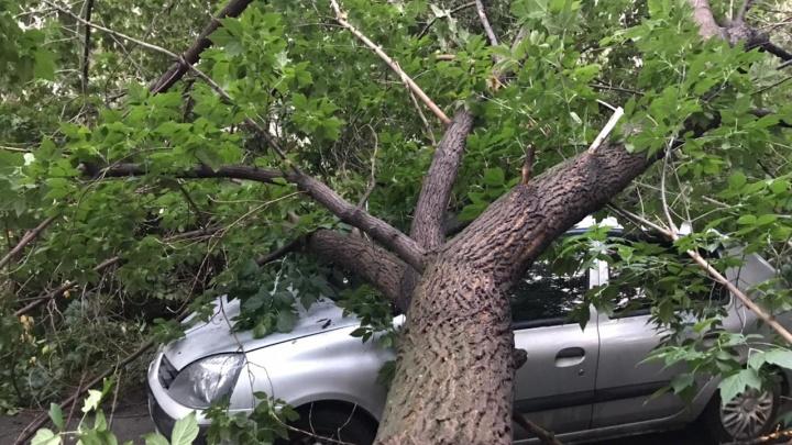 На Уралмаше огромное дерево рухнуло на две иномарки