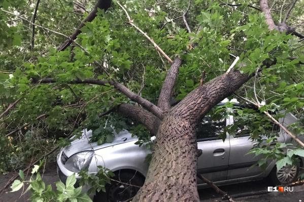 Дерево рухнуло на машины