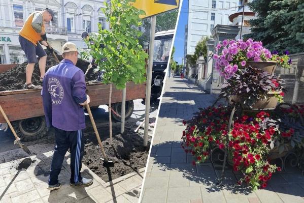 Облик улицы Куйбышева изменится в лучшую сторону — растений станет больше