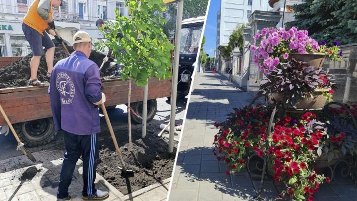 На улице Куйбышева высадили каштаны и цветы