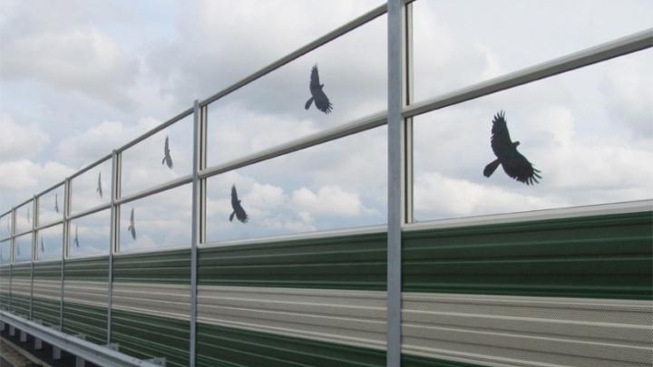 Тюменские власти, обещавшие нанести силуэты птиц на шумозащитные экраны, не нашли на это деньги