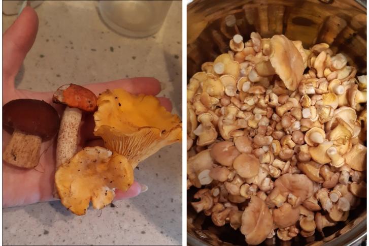 А эти грибы нашли в селе Барлак