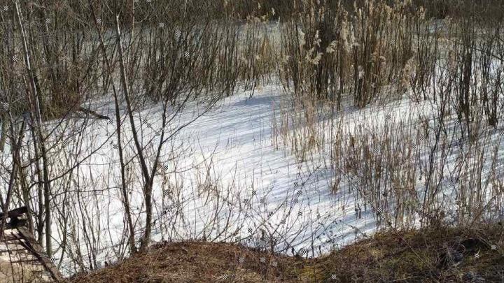 «Похоже, экологическая катастрофа»: в Ярославской области в лесном пруду обнаружили неизвестное вещество